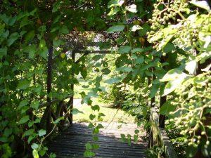 Nieopodal, za kładką, magiczny ogród...